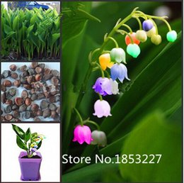 Wholesale Imported Flowers - Flower Bonsai seeds 100pcs import bell orchid seeds,Windbell orchids, rare precious flowers! Home gardening DIY