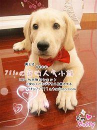 Wholesale Pet Hair Tie - Free shiping 20pcs Dog Neck Tie Dog Bow Tie Cat Tie Pet Grooming Supplies Pet Headdress Flower WY142