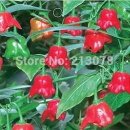 2019 sementes ornamentais de pimenta Frete grátis Legumes frutas e sementes pimentão chimes skgs vento ornamental sementes de hortaliças comestíveis varanda bonsai-20 sementes desconto sementes ornamentais de pimenta