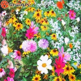 Shop mix perennial flower seeds uk mix perennial flower seeds free 200 pcs bag wildflowers combination seeds perennial flower planting mixed wildflower seeds aromatic pleasant smelling fragrant mightylinksfo
