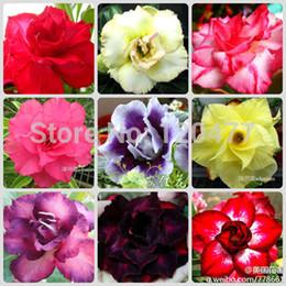 2019 semi di adeno reale arcobaleno semi di rosa del deserto, vasi da fiori fioriere semi Adenium obesum, spedizione mista - 1 seme / pacchetto sconti semi di adeno