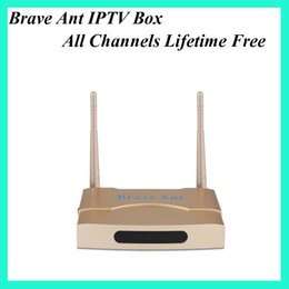Wholesale Ant Usb - All channels free forever IPTV box brave ant 500+ channels 350+ HD channels arabic turkish french UK DHL free shipping