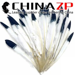 Wholesale White Duck Costume - CHINAZP Factory 50pcs lot 30~35cm(12~14inch) Length High Quality Dyed White with Black Tips Duck Pointer Primary Wing Feathers