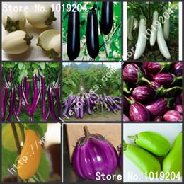 semillas enanas Rebajas Semillas de hortalizas, 200 PC de berenjena, negra, morada, amarilla, verde, berenjena blanca.