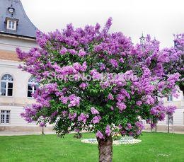 2019 piante perenni di giardino Semi originali dell'albero del fiore del lillà del pacchetto, semi aromatici della pianta del giardino 20pcs / bag sconti piante perenni di giardino