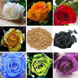 2019 fiore di semi di rose 150 Particles Seasons Semi di fiori rosa Rosa Viola Nero Bianco Rosso Verde Blu Golden Orange Roses Seed fiore di semi di rose economici