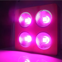 Wholesale Promote Growth - Better COB led grow light 660nm red and 455nm blue led lamp for plant, promote growth blossom and fruit, input voltage 90-265V