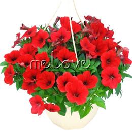 Red Petunia Flower 200 Semi ideale per il fai da te Home grower Balcone Bonsai Landscape Flower Facile da germinare da
