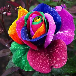 Wholesale Rainbow Rose Flower - Free shipping 100pcs Seeds Rare Rainbow Rose Flower Lover Multi-color Plants Home Garden rare rainbow rose flower seeds