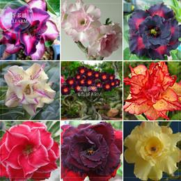 adenio di sementi Sconti Bellfarm Adenium misto 9 tipi doppio petali di fiori, 100 semi / confezione, confezione professionale, cimelio bella rosa del deserto