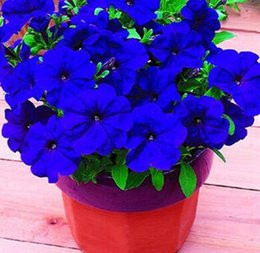 Wholesale Petunia Seeds - free shipping 100pcs bag petunia seeds blended-color flower seeds plant bonsai for home garden