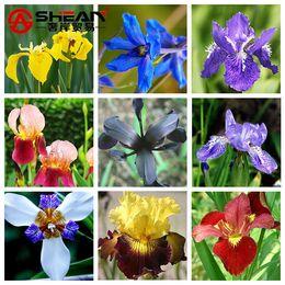 vendas de sementes de flores Desconto Venda quente 9 Cores Pode Ser Escolher Iris Orquídea Sementes Belas Flores Perenes Sementes Iris Flor-100 PCS