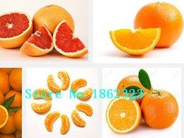 Wholesale China Climb - 20Pcs Mini Potted Edible Fruit Seeds Bonsai Orange Seeds China Climbing Orange Tree Seeds Free shipping ``