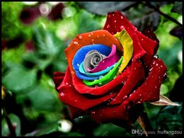 Wholesale Colourful Flowers - Free-Shipping Colourful Rainbow Rose Seeds Purple Red Black White Pink Yellow Green Blue Rose Seeds Plant Garden Beautiful Flower seeds