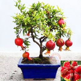 Wholesale Wholesale Bonsai Seeds - 20pcs lot, bonsai pomegranate seeds very sweet Delicious fruit seeds,succulents Tree seeds Free Shipping SS271