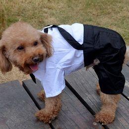 Wholesale Denim Shirts Leather - Cotton & Washing Denim Leather Braid Strap Pants for Dog Jumpsuits Clothes Plaid Tie & Metal Buttons Pet Romper Clothing t shirt free shipp