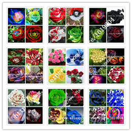 Wholesale Wholesale Rose Varieties - 36 varieties of roses mixed seed, 200PC rare bonsai rainbow flower seeds, full color plant, A group of potted rose seeds