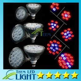 Wholesale E27 36w Grow - Full Spectrum LED Grow Light 15W 21W 27W 36W 45W 54W E27 Grow Lamp PAR38 PAR30 Bulb Flower Plant Hydroponics System lights 50