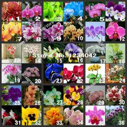 semi di pseudotruncatella Sconti 200PC semi di orchidea farfalla, 36 varietà di bellissimi semi di fiori bonsai, piante di orchidee ornamentali Senior