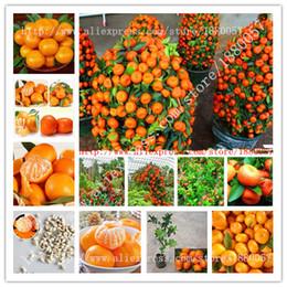 Wholesale Fruit Trees Planting - Delicious golden orange seed,20PC Mini potted fruit tree seeds,Garden Interesting Bonsai Plant