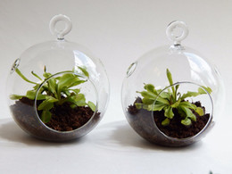 "Wholesale Wholesale Glass Hanging Terrariums - 2pcs set Air Plant Orb Terrarium Kit,4.5 inches 6"" DIY Garden Planter With Air Plant,Moss,Succulent,Green Gifts For Friends"