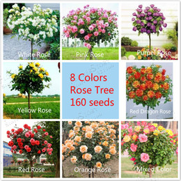 Wholesale Popular Trees - 8 Colors Chinese Rose Tree Seeds, popular variety ideal DIY Home bonsai flower, each 20 seeds ,160 seeds at all ,free shipping