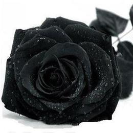 Wholesale Rare Beautiful Flowers - Rose seeds black rose seeds rare Amazingly Beautiful Black Rose Flower - 100 pcs seeds