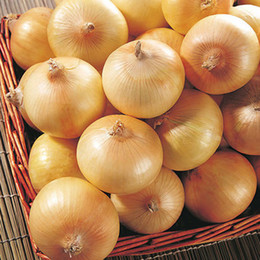 Wholesale Onions Seeds - New Delicious 100pcs Giant Onion Seeds Organic Russian Heirloom Garden Supplies For Fun Interest DIY