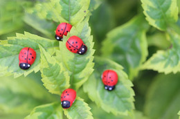 Wholesale Diy Painting Kids - New Cute 100 Pcs Wooden Ladybird Ladybug Sticker Children Kids Painted adhesive Back DIY Craft Home Party Holiday DecorationsN03