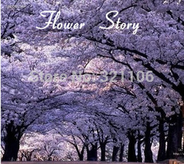 Semi di alberi crescenti online-Il trasporto libero 25 semi di Paulownia (albero della principessa o albero reale dell'imperatrice), fornisce l'ombra, fragrante, a rapida crescita