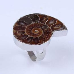 gioielli in pietra fossile Sconti 10pcs all'ingrosso di fascini argento placcato naturale Ammonite fossile di pietra di dimensioni diverse Ammonite fossile regolabile gioielli anello di dito