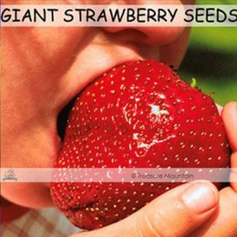 Wholesale Giant Fruit Seeds - Free shipping 200 Seeds   Pack, Super Giant Strawberry Fruit Seed Apple Sized