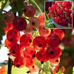 Semi di uva spina Pan-American semi di frutta Lanterna frutta semi - 30pcs pianta giardino pianta casa pianta semillas * Spedizione gratuita da