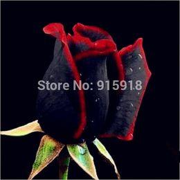 Wholesale Red Garden Stones - Bonsai Flower seeds 50 Pcs Rare Amazingly Beautiful Black red edge rose seeds Home Garden DIY Free shipping