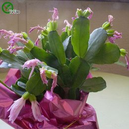 2019 semi di cactus Semi di cactus granchio Semi di fiore bonsai Piante in vaso Fiori 30 Particelle / Sacchetto F014 sconti semi di cactus