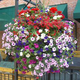 Semi di fiore di petunia online-300 pezzi Petunia Semi Multicolor Petunia Hybrida Giardino Casa Bonsai Balcone Fiore Morning Glory Seeds