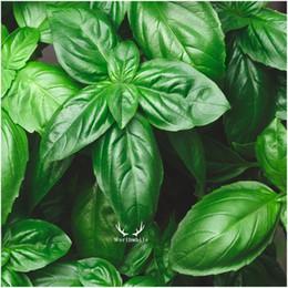 Foglia di seme online-500 semi basilico foglia grande sapore dolce ocimum basilicum NON-OGM erba giardino domestico fai-da-te facile da coltivare ortaggio delizioso