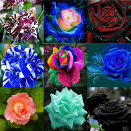 Wholesale Wholesale Single Roses - New Varieties 10 Colors Rose Flower Seeds 100 Seeds Per Package Wedding Flower Seeds For Home Garden