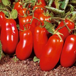 Semi di castagno organico online-Semi di pomodoro rosso San Martsano Varietà vegetale Heirloom bio 50pcs S069