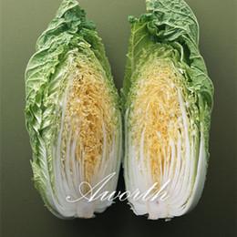 Chinse Cabbage Yellow Heart Vegetable 500 Seeds Verdure rustiche fatte in casa con facilità per l'inverno da