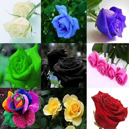 Wholesale Colourful Bags - Rose Seeds Free Shipping Colourful Rainbow Rose Seeds Purple Red Black White Pink Yellow Green Blue Rose Seeds 100pcs bag XL-266