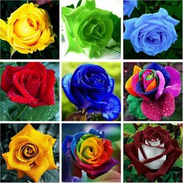 Wholesale Perennial Flower Plants - seed 9kinds mixed 100piece rose seeds  Four Seasons sowing seeds of perennial flowers rose flowers seeds easy to plant