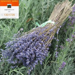 Wholesale Dried lavender flowers Yongsheng pure natural dried lavender bouquet of lavender blue space a pound
