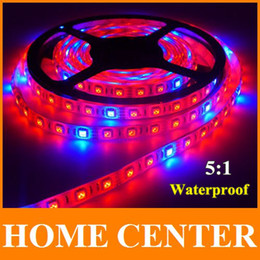 Wholesale Power Plant Supply - Wholesale-Waterproof 300LED 5M 5050 Grow LED Flexible Strip Light 5 Red 1 Blue Greenhouse Hydroponic Plant Growing Lamp+12V6A power supply