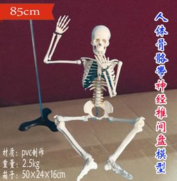 Wholesale Realistic Skeleton Human - wholesale New Human skeleton with spinal nerve disc model 85cm Can be active teaching medical realistic mannequins 1PC C007