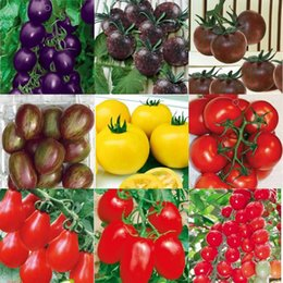 Новый 100 шт Черная жемчужина томат семена овощи семена таблица сезонные фрукты помидоры черри, помидоры черри, семена маленькие семена томатов HY1165 от Поставщики черные помидоры