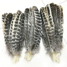 Wholesale Turkey Wedding Decoration - wholesale beautiful precious wild turkey tail feathers 8-12inches   20-30cm (Many Sizes for You To Choose)