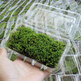 2019 mini bonsai Falso verde muschio falso mini verde muschio pietra per micro paesaggio ornamenti da giardino natura musci pietra per decor attrezzi da giardinaggio bonsai display sconti mini bonsai
