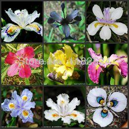 Bonsai potting mix online-25 pz Iris Seeds Mix 9 Colori Tectorum Fleur -De -Lis Semi di Fiori Rari Bonsai Bulbi di Fiori Semi Per Vasi Da Fiori Fioriere
