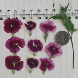 Fiori secchi pressati reali naturali di alta qualità, fiore eterno del fiore della vera pianta per il caso 120Pcs del telefono cellulare dell'epossiresina all'ingrosso da